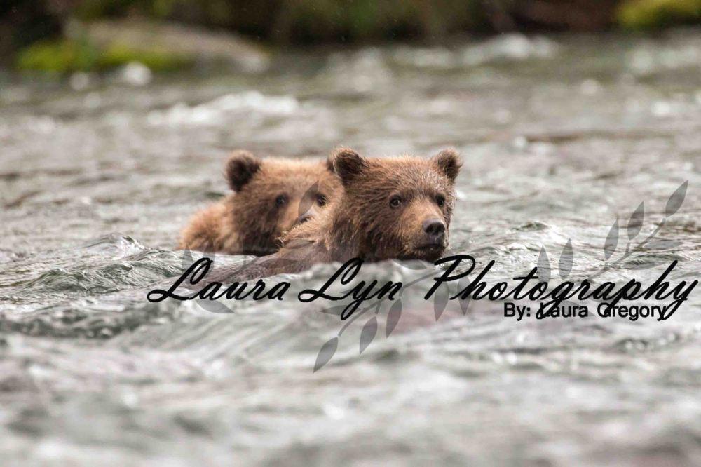 Brown Bear 10 Watermark Blog