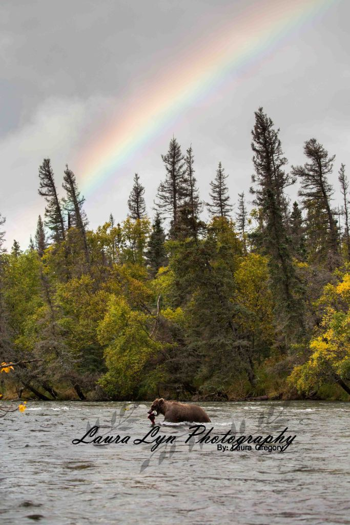 Brown Bear 13 Watermark Blog