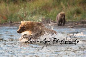 Brown Bear 52 Watermark Blog