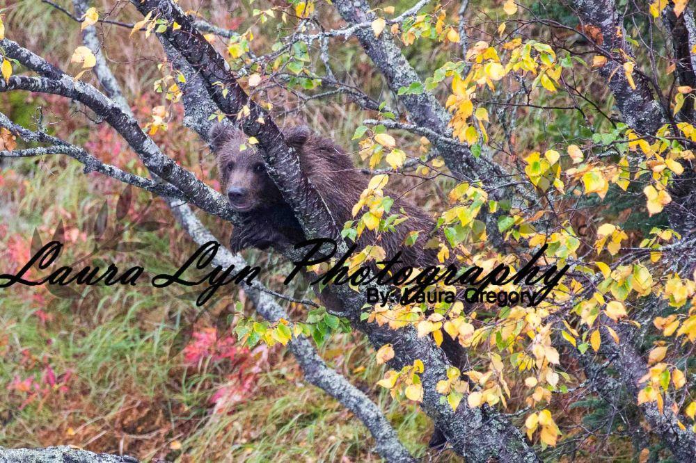 Brown Bear 61 Watermark Blog
