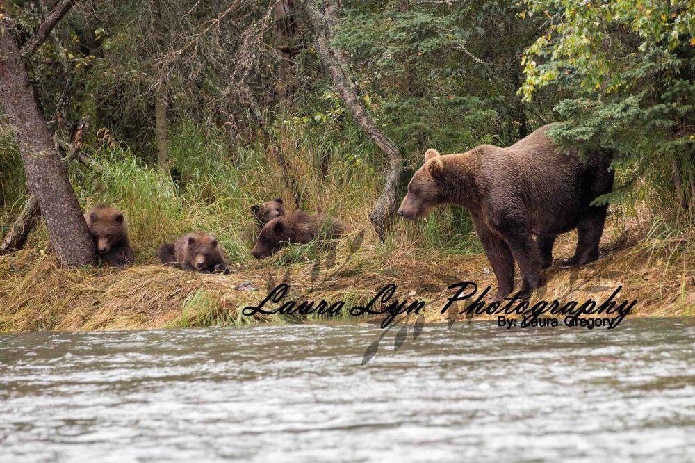 Brown Bear 68 Watermark Blog
