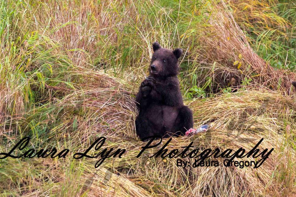 Brown Bear 74 Watermark Blog