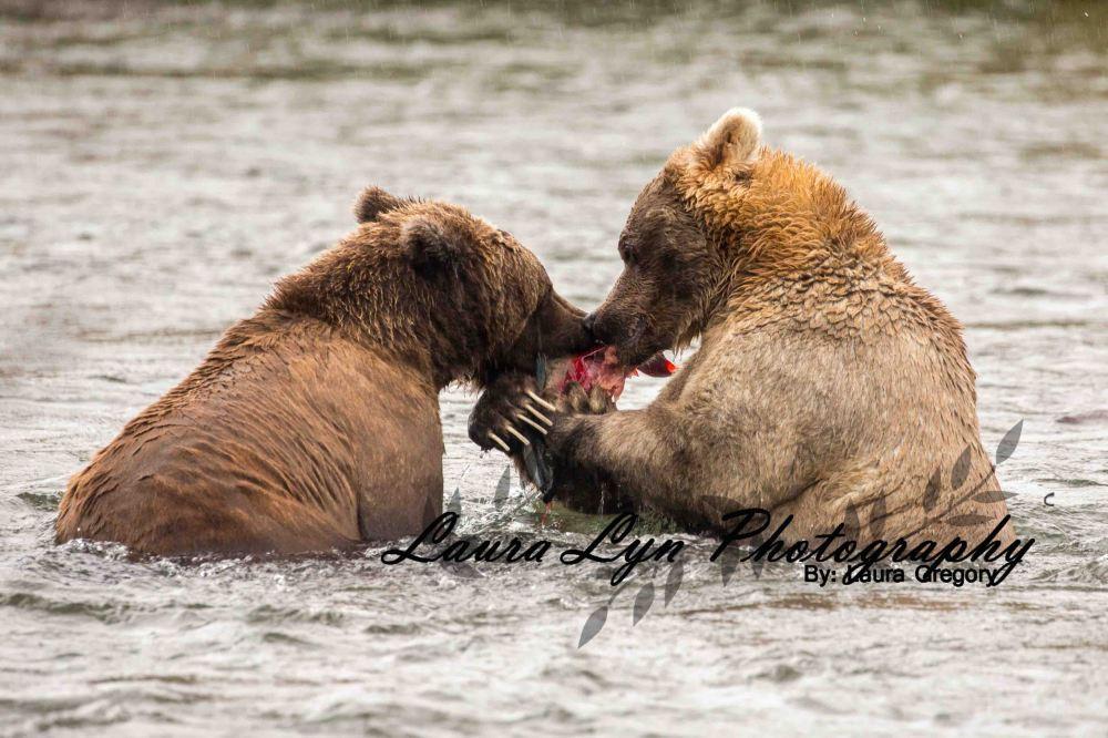 Brown Bear 79 Watermark Blog