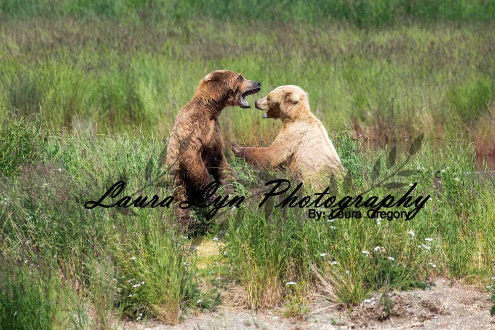 Brown Bear Katmai National Park July 2 2015 2 LOW Watermark Blog