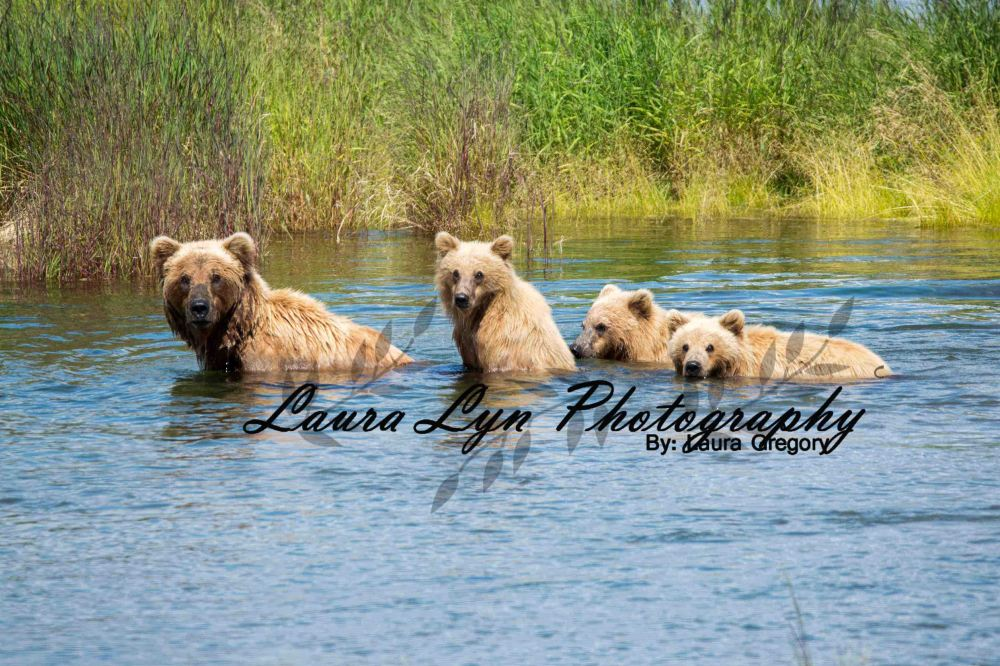 Brown Bear Katmai National Park July 2 2015 20 LOW Watermark Blog