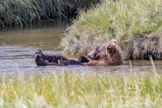 Brown Bear Lake Clark June 27 (11 of 20) EDIT WATERMARK