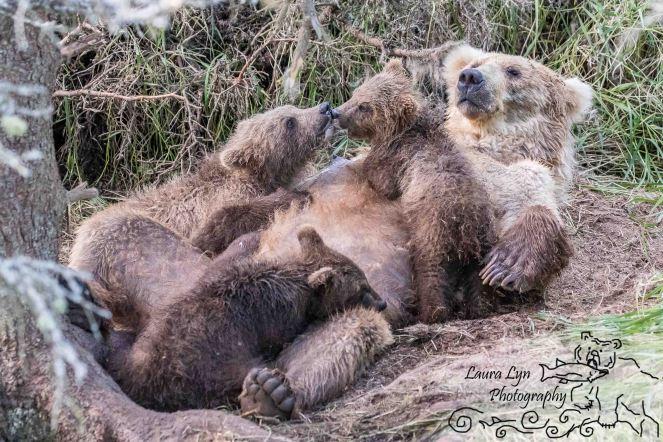 Katmai National Park July 10 2016 (123 of 153) EDIT 2 WATERMARK