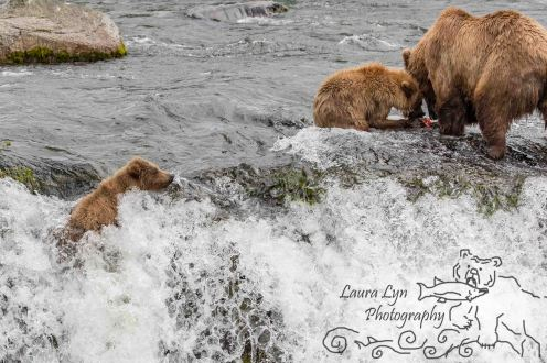 Katmai National Park July 10 2016 (67 of 153) WATERMARK