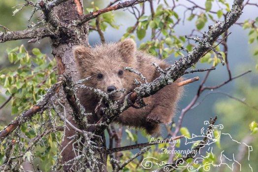 Katmai National Park July 9 2016 (66 of 84) Watermark
