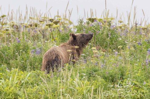Lake Clark National Park July 1 2016 (3 of 1) WATERMARK