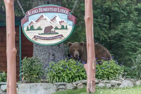 Lake Clark National Park July 1 2016 (9 of 18) WATERMARK