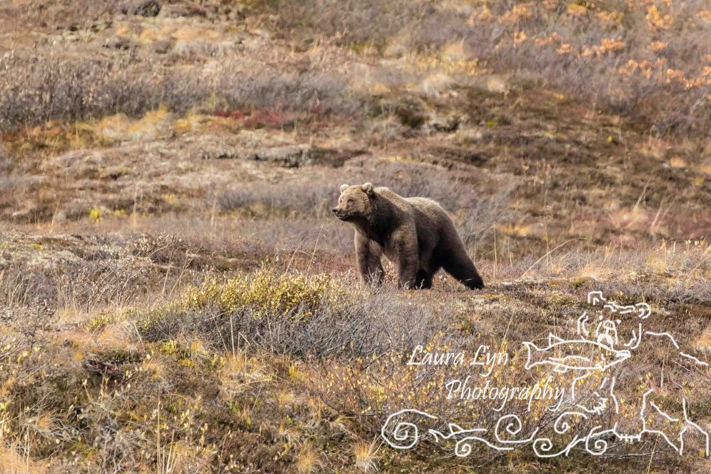 road-lottery-denali-2-of-12-watermark