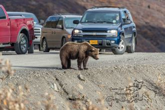 road-lottery-denali-3-of-12-watermark