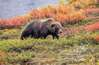 bear-in-color-9-2014-4-blog