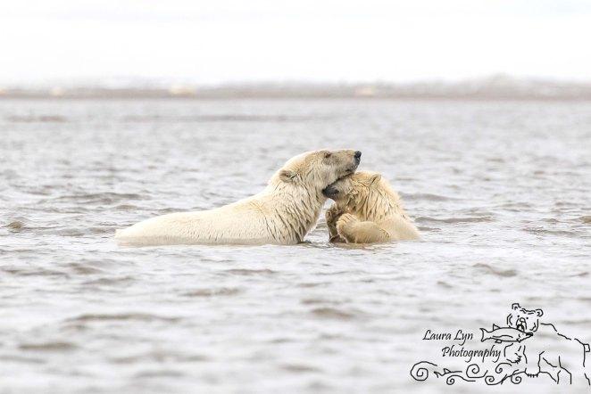 polar-bear-kaktovik-september-19-1-of-1-watermark-blog