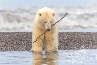 polar-bears-september-19-2016-15-of-35-watermark-blog
