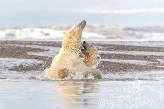 polar-bears-september-19-2016-27-of-35-watermark-blog