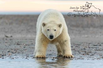 polar-bears-september-21-2016-18-of-53-watermark-blog