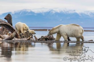 polar-bears-september-22-2016-32-of-40-edit-40-of-2editwatermark