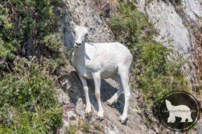 July 12 Denali 44 (1 of 4)-2