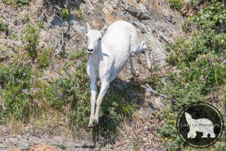 July 12 Denali 44 (3 of 4)-2