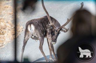 July 14 Denali Day 46 (19 of 35)-2