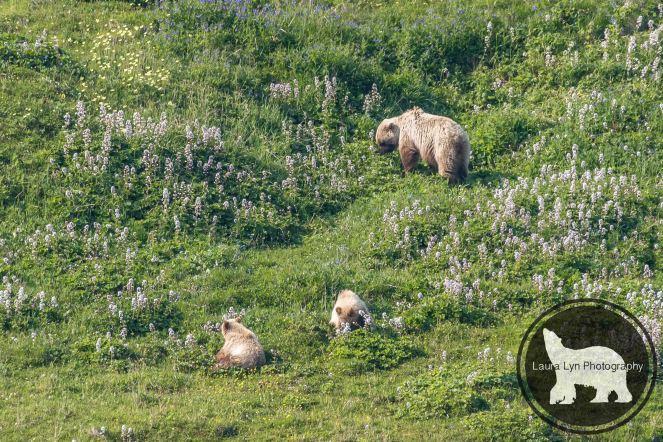 July 14 Denali Day 46 (2 of 35)-2