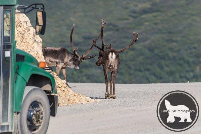July 14 Denali Day 46 (20 of 35)-2