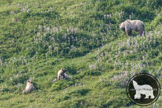 July 14 Denali Day 46 (4 of 35)-2