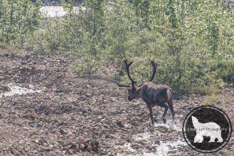 July 14 Denali Day 46 (5 of 35)-2